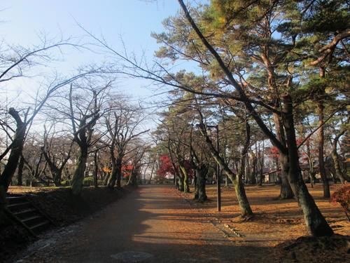 晩秋、千秋公園の紅葉・黄葉・落葉のルクス(lux)・・・その17_c0075701_192650.jpg