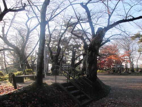 晩秋、千秋公園の紅葉・黄葉・落葉のルクス(lux)・・・その18_c0075701_1962845.jpg