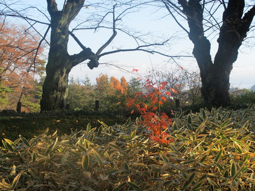 晩秋、千秋公園の紅葉・黄葉・落葉のルクス(lux)・・・その18_c0075701_196792.jpg