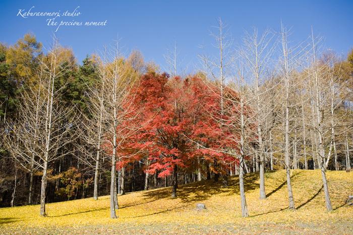 錦の富士見高原_c0137403_16511171.jpg