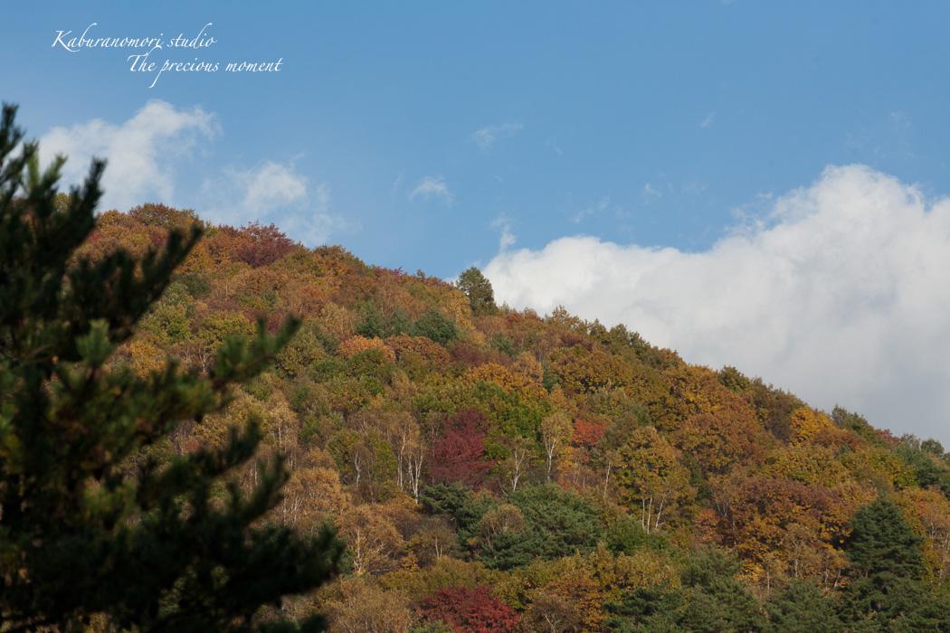 錦の富士見高原_c0137403_17342451.jpg