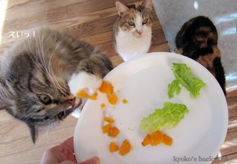 猫たちのサンクスギビング_b0253205_505953.jpg