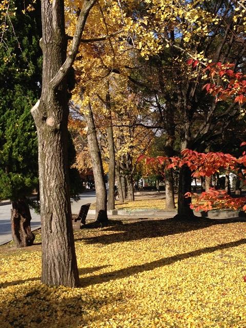 広島平和記念公園を歩いて(*^^*)_a0213806_23293181.jpg