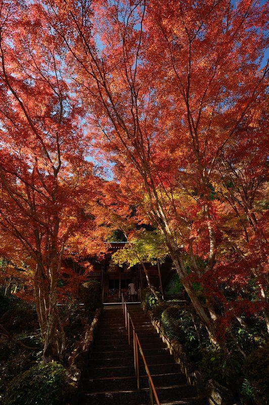 2013京都の紅葉!・勝持寺 其の二_f0032011_13135527.jpg