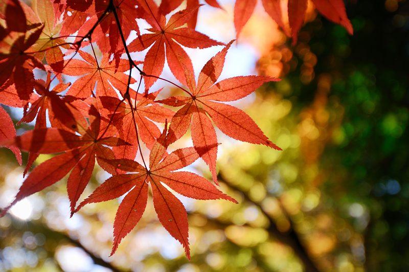 2013京都の紅葉!・勝持寺 其の二_f0032011_13142090.jpg