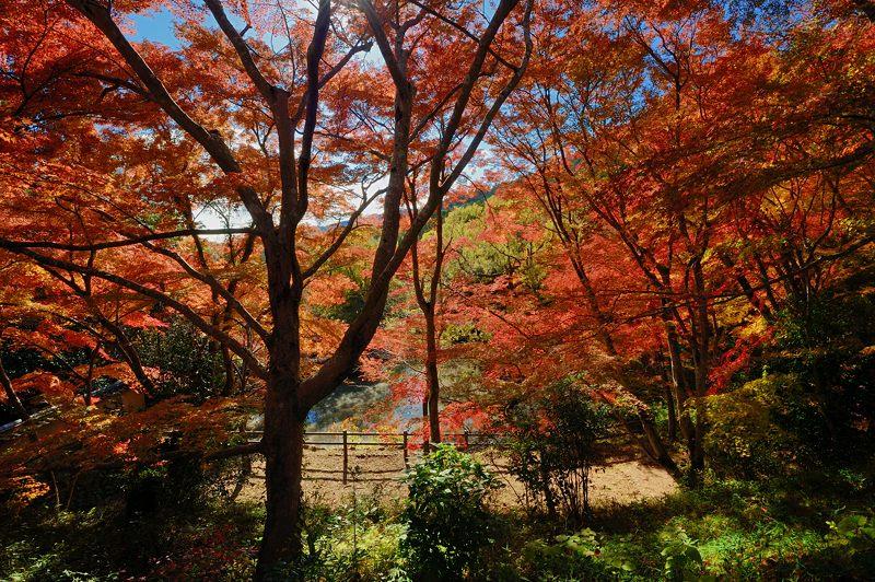 2013京都の紅葉!・勝持寺 其の二_f0032011_1314504.jpg