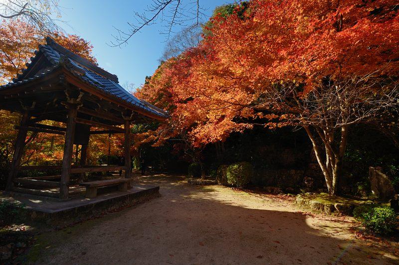 2013京都の紅葉!・勝持寺 其の二_f0032011_13155791.jpg