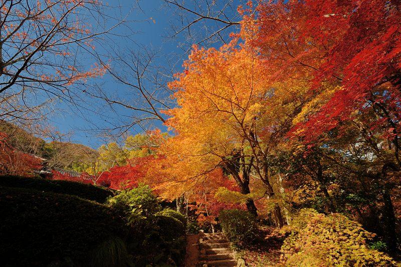 2013京都の紅葉!・勝持寺 其の二_f0032011_13162292.jpg