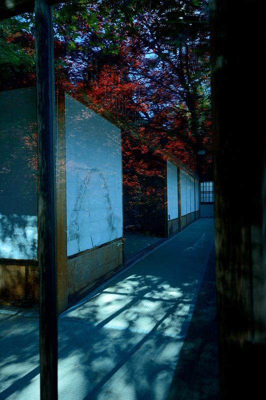 2013京都の紅葉!・勝持寺 其の二_f0032011_13165667.jpg