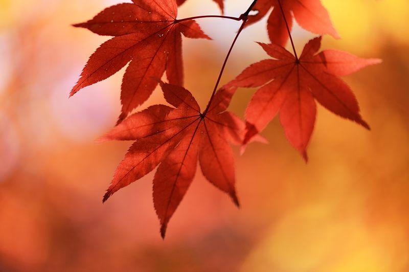 2013京都の紅葉!・勝持寺 其の二_f0032011_13171688.jpg