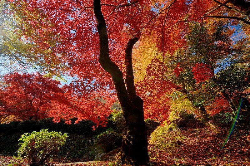 2013京都の紅葉!・勝持寺 其の二_f0032011_13195171.jpg