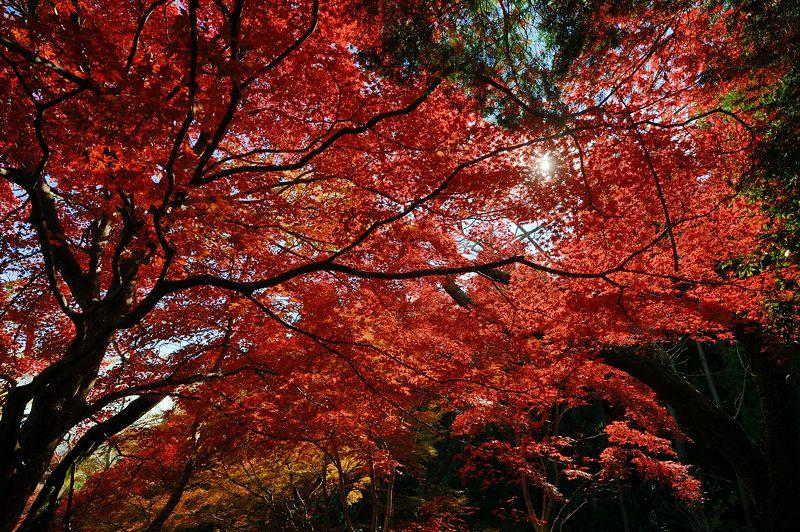 2013京都の紅葉!・勝持寺 其の二_f0032011_1319976.jpg