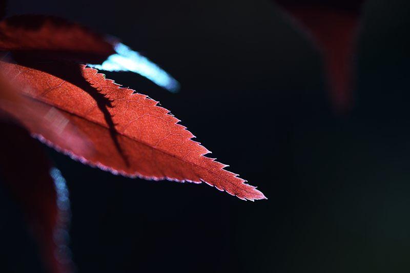 2013京都の紅葉!・勝持寺 其の二_f0032011_13205422.jpg