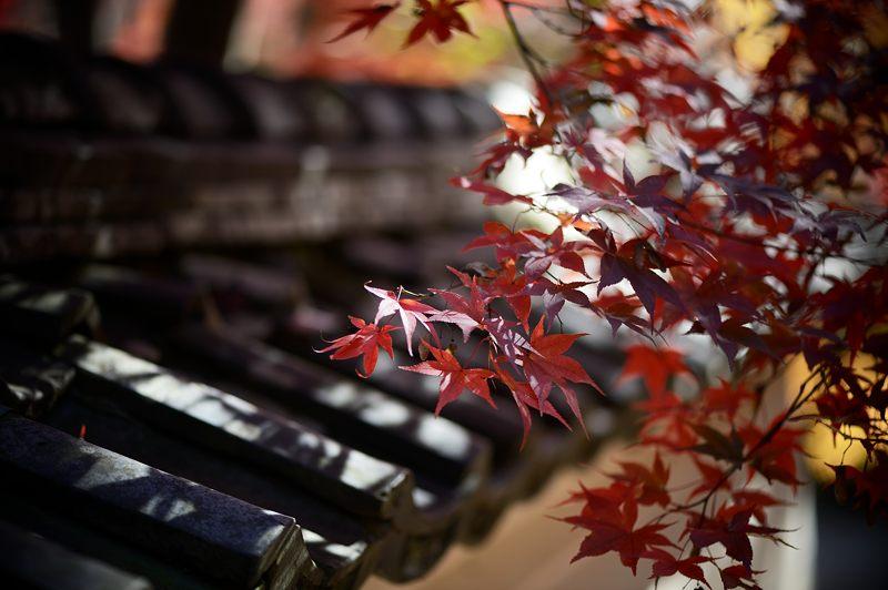 2013京都の紅葉!・勝持寺 其の二_f0032011_1321351.jpg