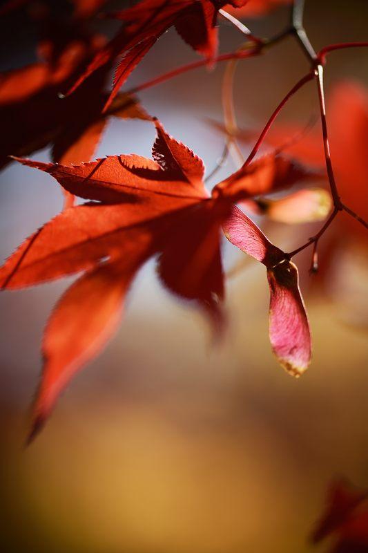 2013京都の紅葉!・勝持寺 其の二_f0032011_13225033.jpg