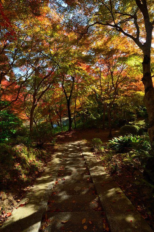 2013京都の紅葉!・勝持寺 其の二_f0032011_13232261.jpg