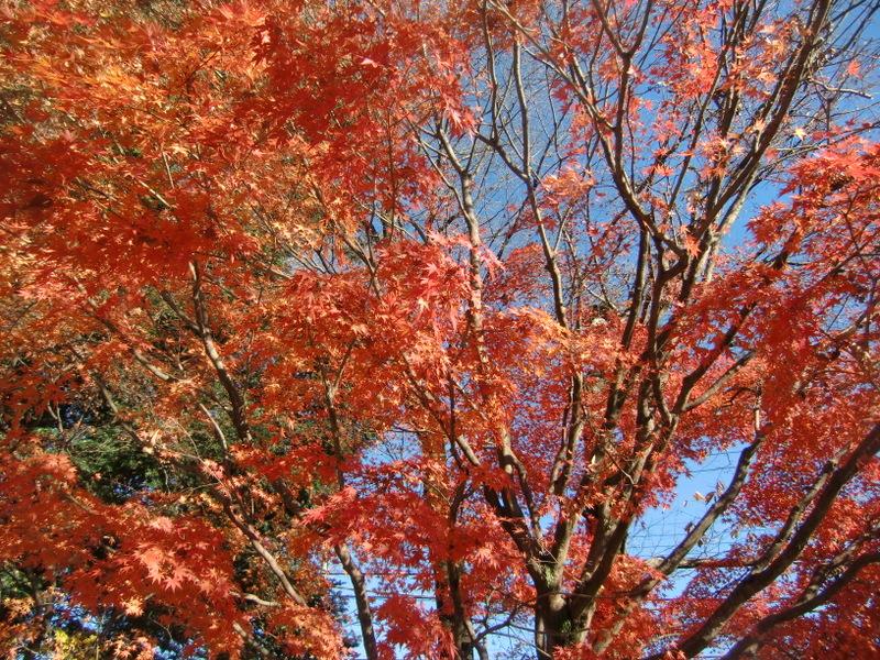 11月29日(土) 休暇を取って鬼怒川に_d0278912_22501872.jpg