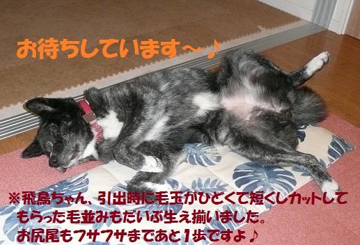 f0121712_10333850.jpg