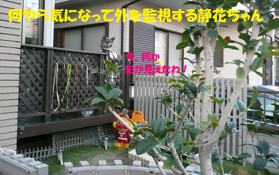 f0121712_6303879.jpg