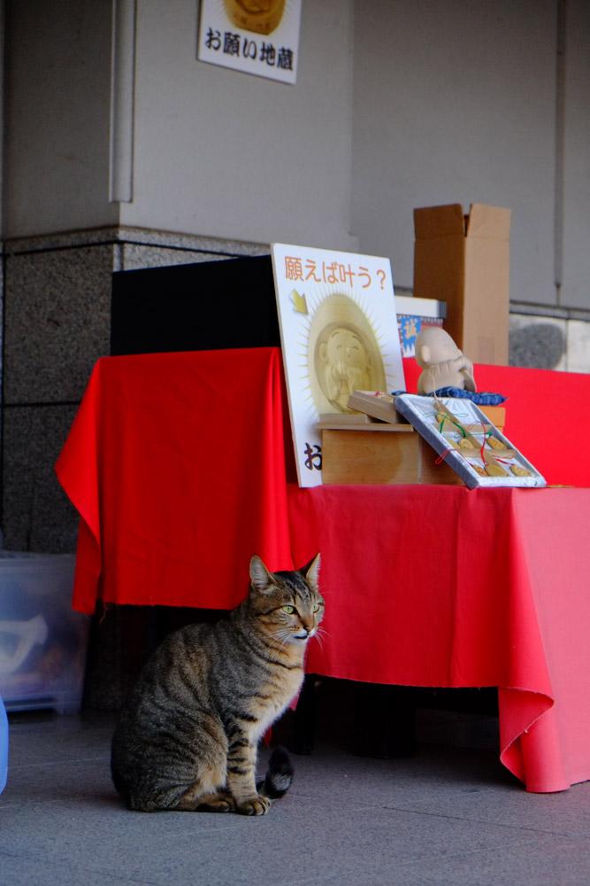 水沢神社_b0023523_21573665.jpg