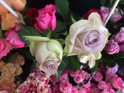 薔薇がバラで小粋に入荷中_f0145839_14141162.jpg