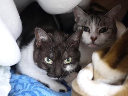 猫のお友だち リリィちゃんシュシュくん編。_a0143140_22181858.jpg