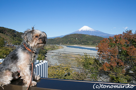 富士山をながめながら_c0024345_2039141.jpg