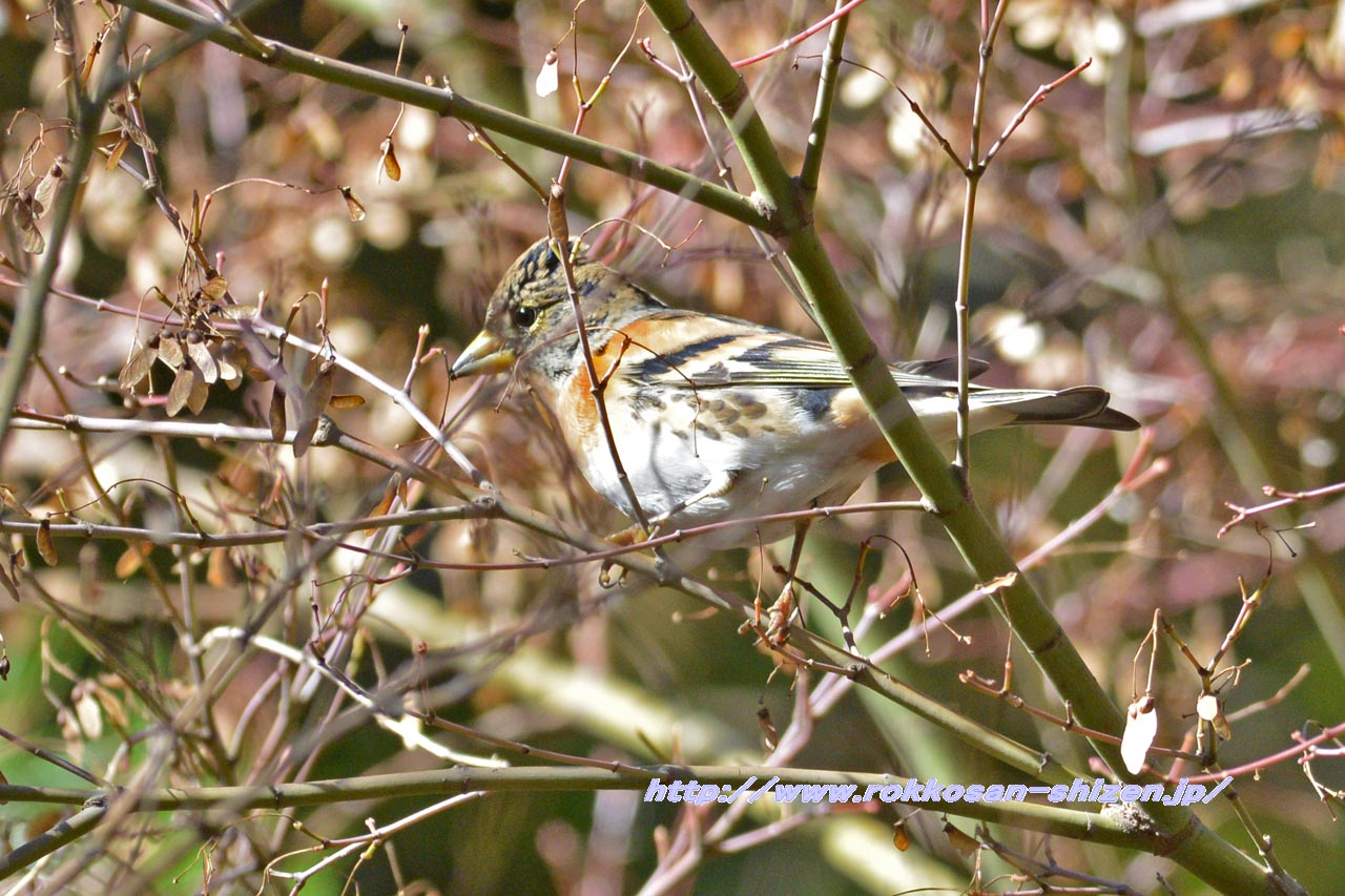 NikonD800Eでの鳥の試し撮り_c0129047_2204549.jpg