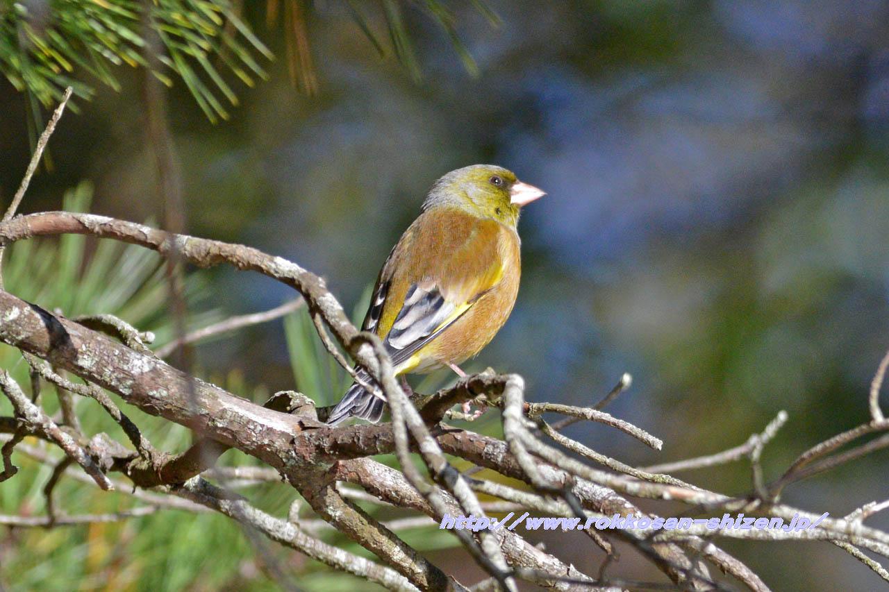 NikonD800Eでの鳥の試し撮り_c0129047_2205861.jpg