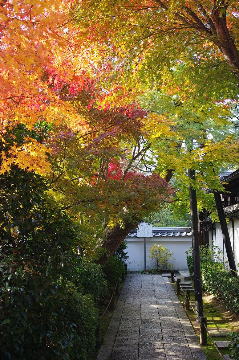 京都の紅葉 2013 〜退蔵院〜_f0152550_18585647.jpg