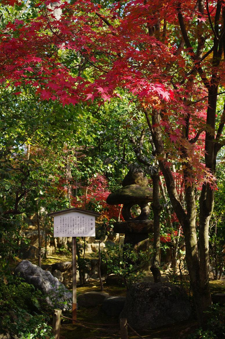 京都の紅葉 2013 〜退蔵院〜_f0152550_18593353.jpg
