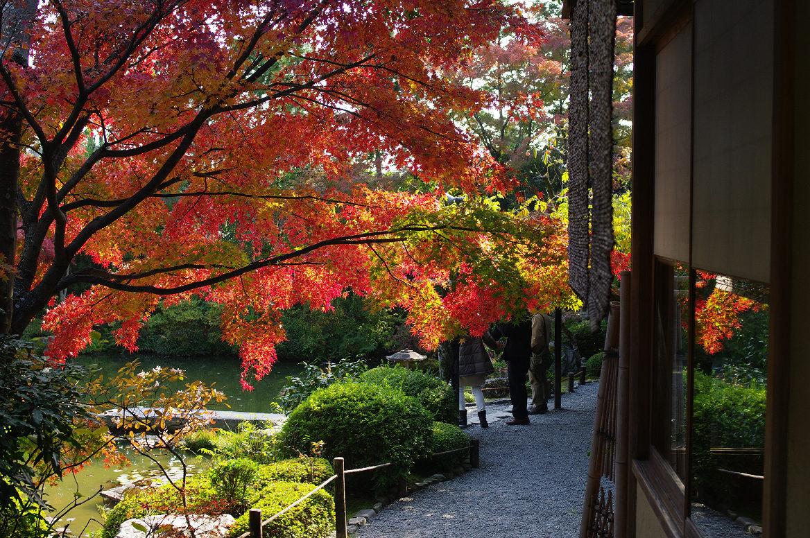 京都の紅葉 2013 〜退蔵院〜_f0152550_18594669.jpg