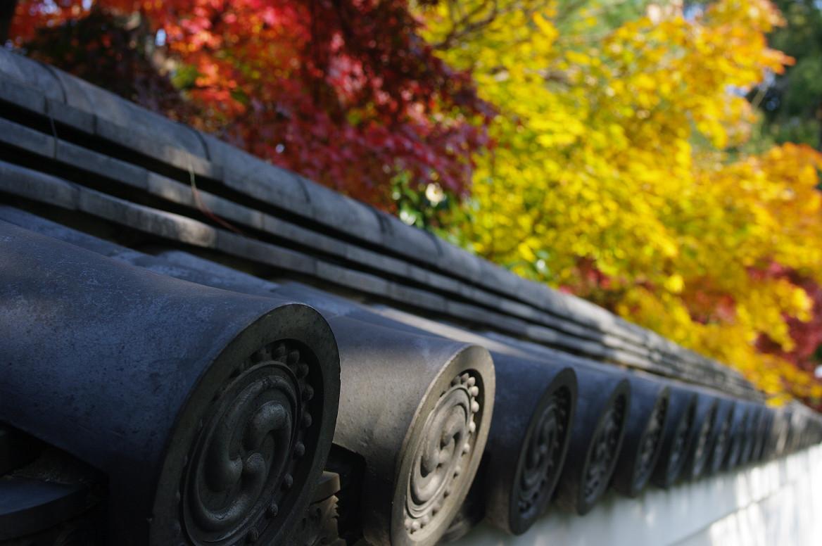 京都の紅葉 2013 〜退蔵院〜_f0152550_1859737.jpg
