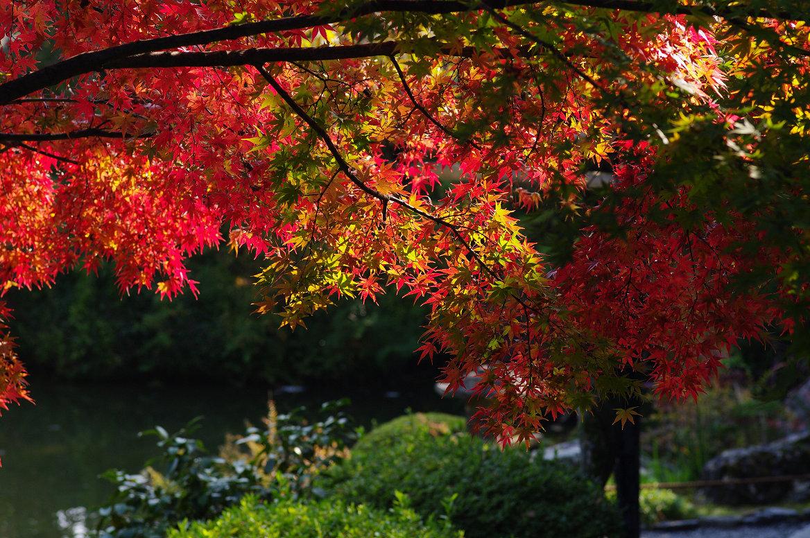 京都の紅葉 2013 〜退蔵院〜_f0152550_1902955.jpg