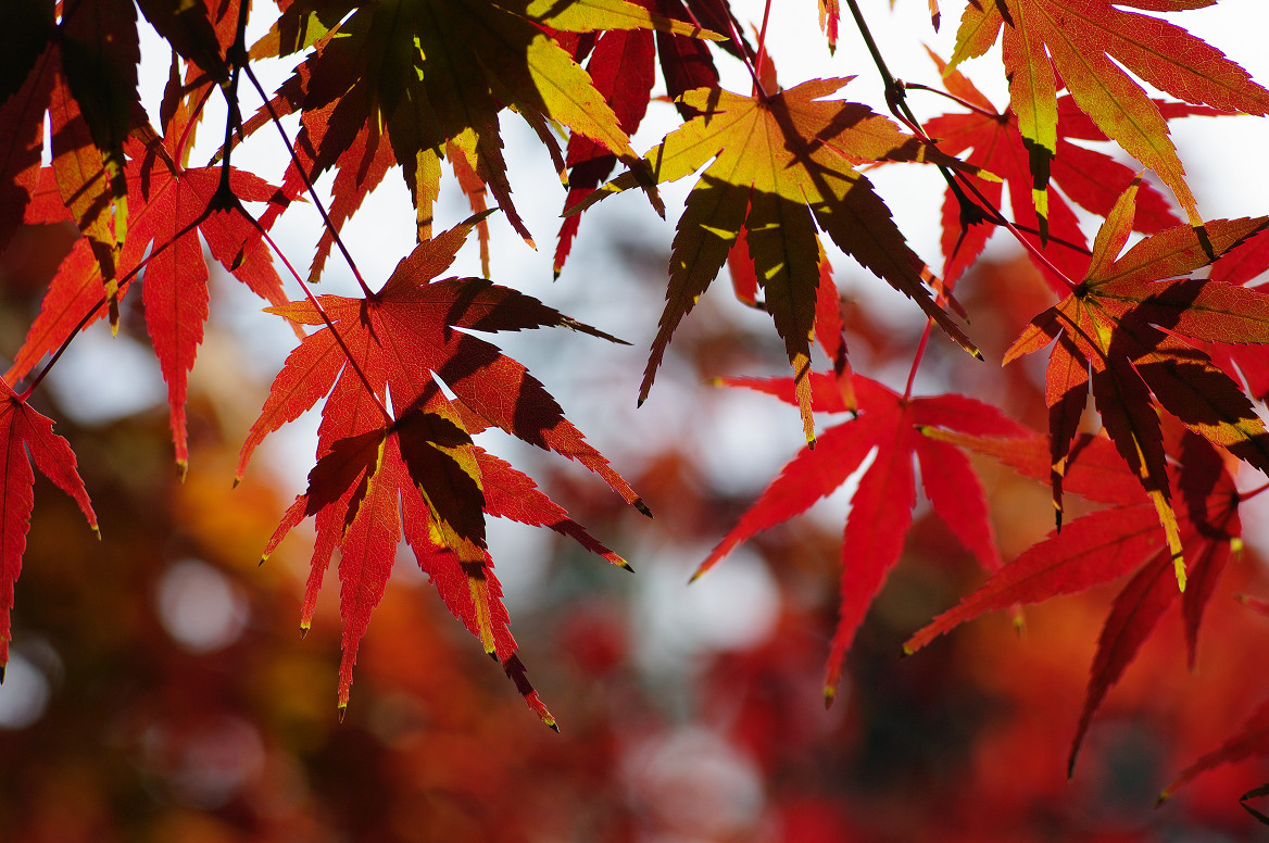 京都の紅葉 2013 〜退蔵院〜_f0152550_1904456.jpg