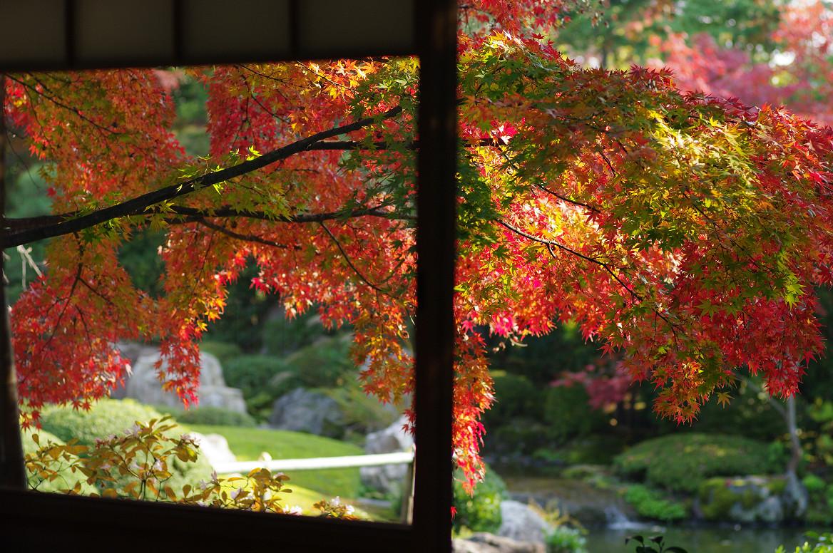京都の紅葉 2013 〜退蔵院〜_f0152550_1913683.jpg