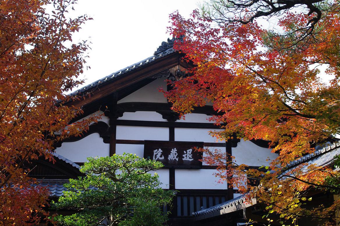 京都の紅葉 2013 〜退蔵院〜_f0152550_1924962.jpg