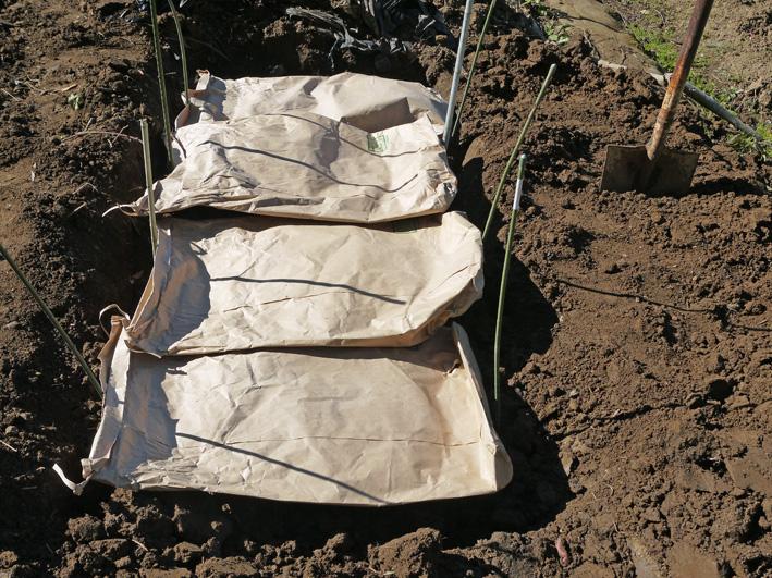 鎌倉すざくの竹炭を使って里芋の冬支度(2013・11・21)_c0014967_13581144.jpg
