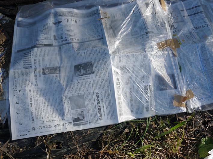 鎌倉すざくの竹炭を使って里芋の冬支度(2013・11・21)_c0014967_1475459.jpg