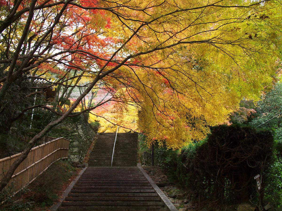 紅葉 2013 <金蔵寺>        _f0021869_23321131.jpg