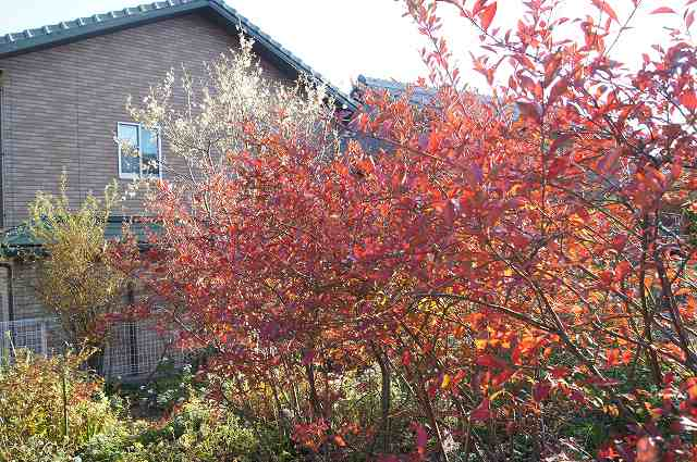 庭の紅葉_e0181373_21432354.jpg