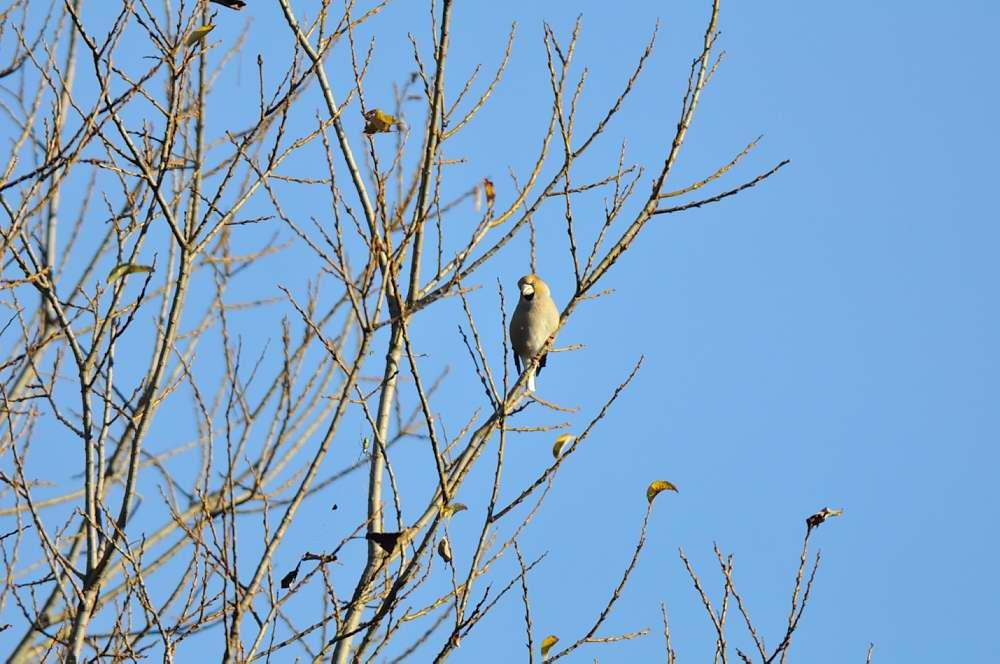 冬鳥がボチボチと_f0202686_19323185.jpg