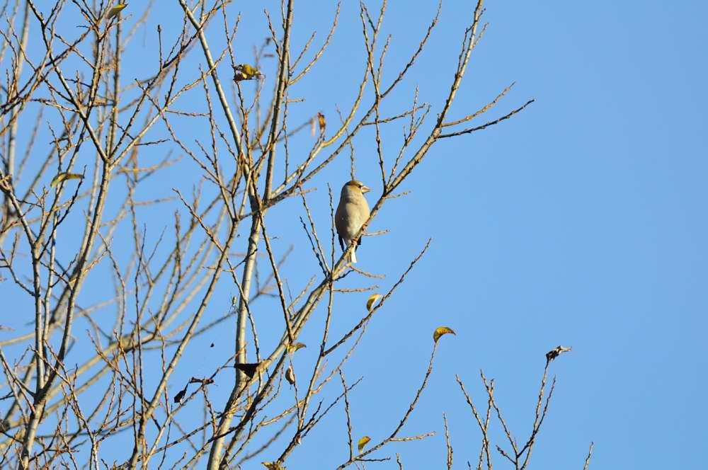 冬鳥がボチボチと_f0202686_19324390.jpg