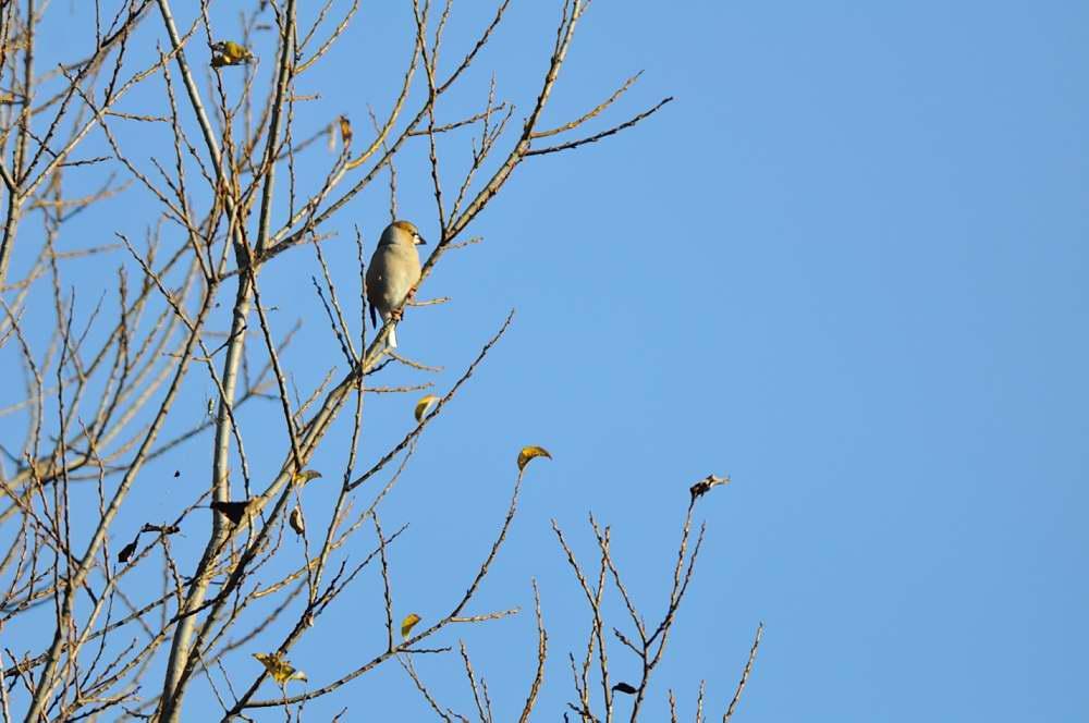 冬鳥がボチボチと_f0202686_19325670.jpg