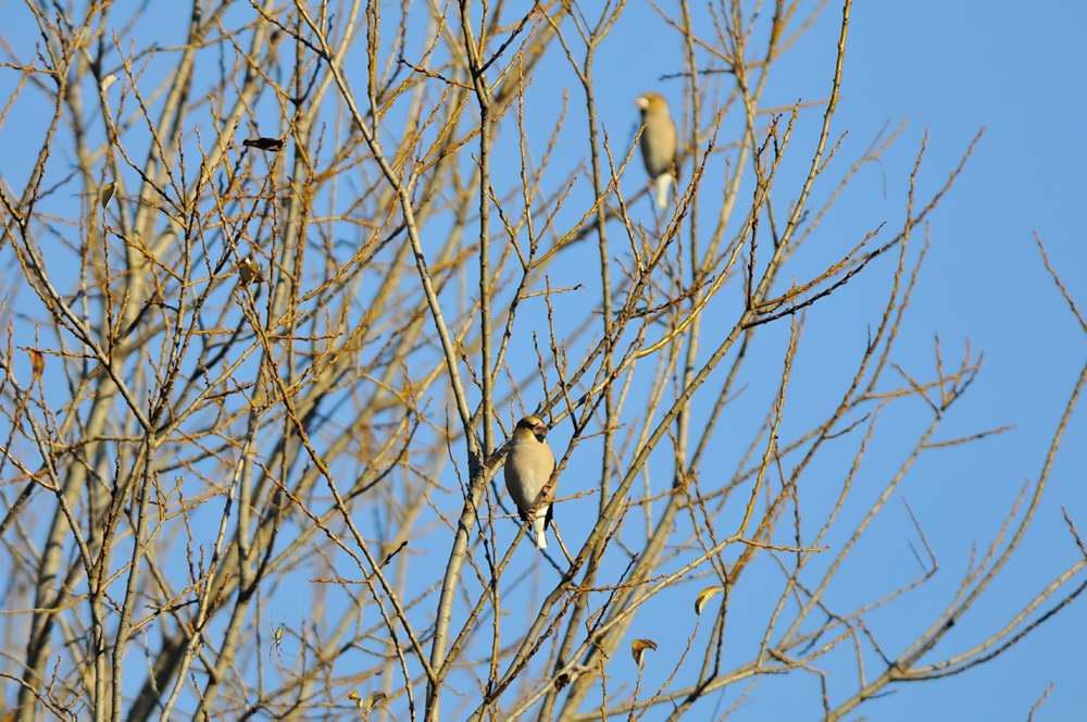 冬鳥がボチボチと_f0202686_19331067.jpg