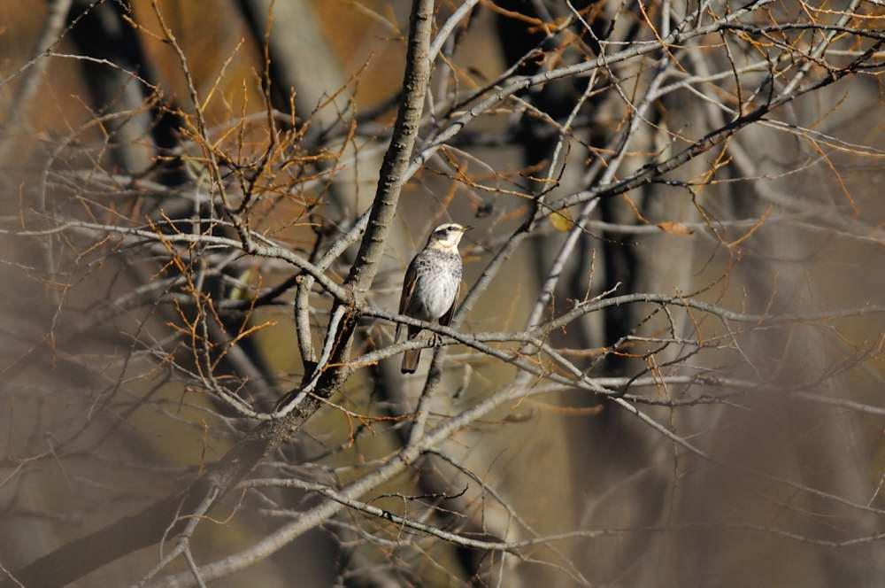 冬鳥がボチボチと_f0202686_19332934.jpg