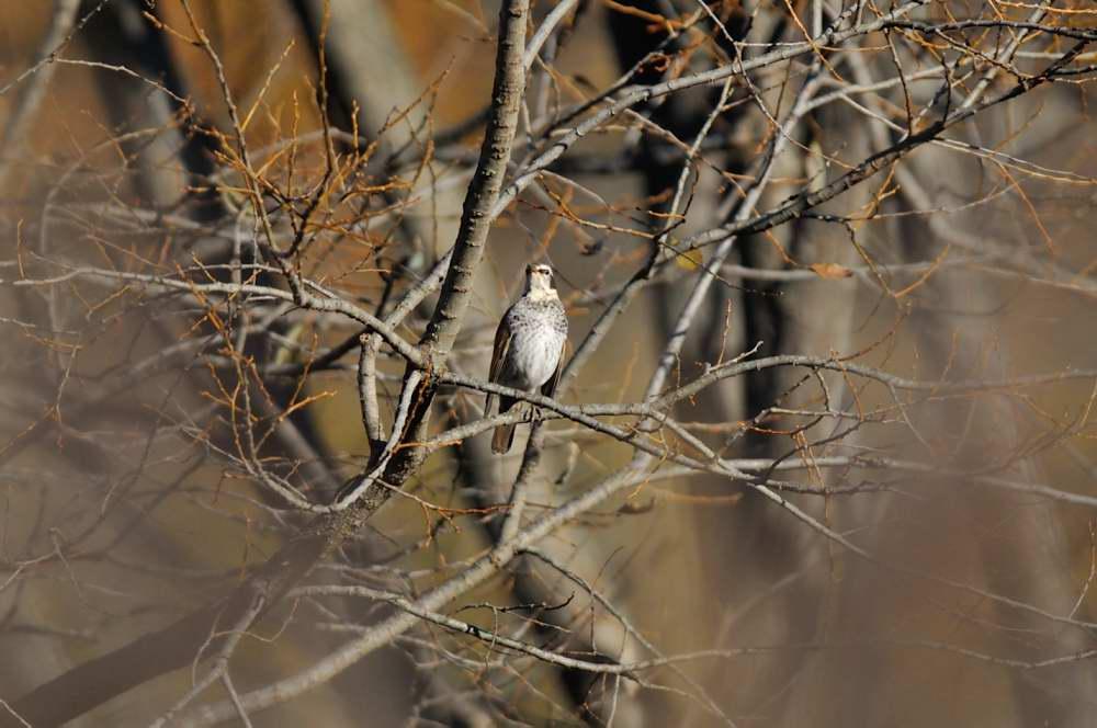 冬鳥がボチボチと_f0202686_19333949.jpg