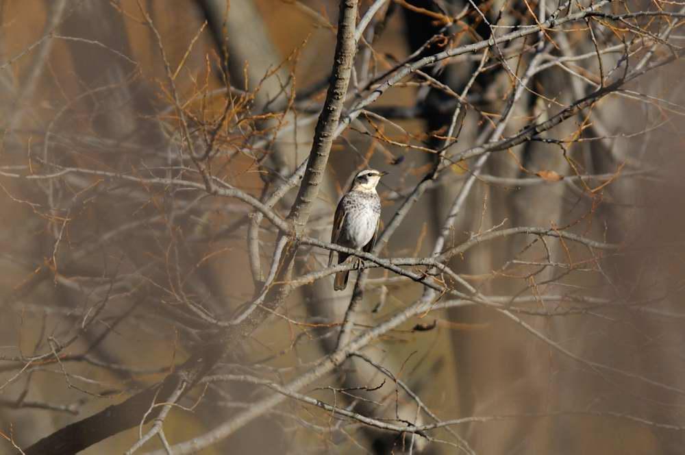 冬鳥がボチボチと_f0202686_19334924.jpg