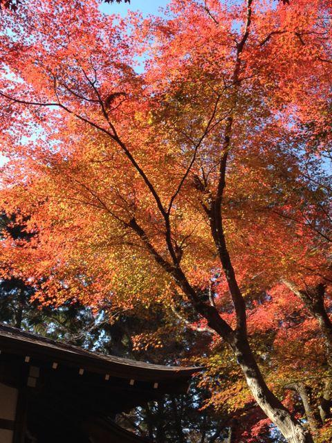 京都の紅葉~吉田山_e0152493_23105346.jpg