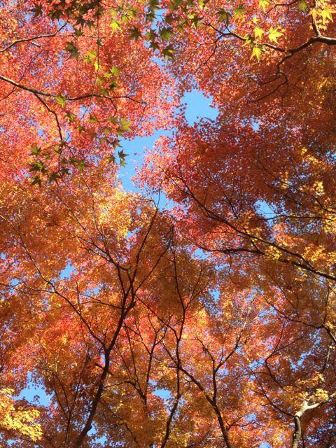 京都の紅葉~吉田山_e0152493_23105673.jpg